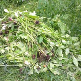 """Some of the Balsam """"Bashed"""""""